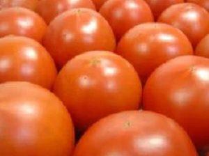 高知県の希少なので高価なフルーツトマト・徳谷トマトは1粒1,000円 通販