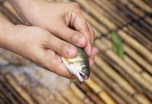 栃木県那珂川にある、やな漁で天然鮎をつかみ取り!食堂「高瀬観光やな」で絶品鮎料理を堪能!