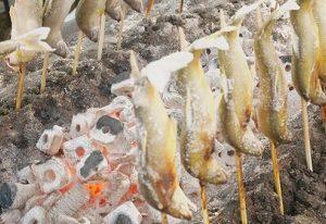 郡上鮎の釣り方・塩焼き食べれるお店・道の駅や遊漁料に友釣りマップ・大会などの情報