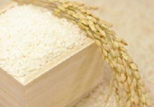 隠岐の島の沖藻塩米 松たか子、広瀬すずがしゃべくりで食べたお米