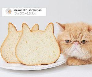 ねこねこ食パン 猫の形をした食パン 都内で行列!焼き上がり即完売 東京都江南区