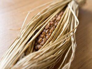 青空レストランで紹介された納豆をお取り寄せ 檜山納豆「桧山納豆」新潟・秋田県檜山