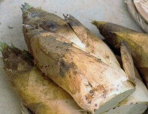 青空レストランで紹介された京たけのこ 京都辻農園 白子筍 お取り寄せ