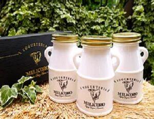 熊本県産ジャージーミルク100%無添加ヨーグルト ミルコロエイジングヨーグルト 大薮牧場