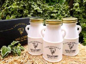 熊本県産ジャージーミルク100%無添加ヨーグルト ミルコロエイジングヨーグルト 大藪牧場